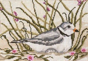 1612 Piping Plover 265–+